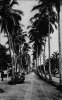 Douala, Allée des Cocotiers. – Devenue depuis avenue des Cocotiers, cette voie est, au sortir de la Seconde Guerre mondiale, à la limite ouest de la ville. Elle commence derrière l'hôpital  européen, et se finit au niveau de l'école urbaine, en coupant successivement les rues de Verdun, Carras, de l'Hôpital et Clemenceau. « Les promenades classiques de Douala conduisent à la plage, au Mât du Pavillon, à l'Allée des Cocotiers, à l'Aviation (ainsi désigne-t-on l'aérodrome), au Bois des Singes, à Bassa (route « Razel »). » – Cette carte postale a été expédiée de Douala pour Montluçon, dans l'Allier, le 22 janvier 1948. Source : Le Cameroun (dépliant d'information) Agence de la France d'outre mer, Paris, 1951.
