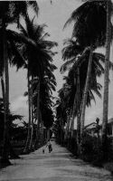 Douala, l'avenue des cocotiers. - précédemment l'allée des cocotiers.