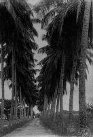 Douala, l'allée des cocotiers devenue l'avenue des cocotiers.