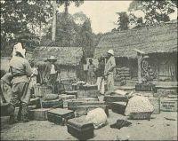 A travers l'Indénié, étape de Malamalasso. – Faute de routes suffisamment carrossables et compte tenu des résistances rencontrées à chaque détour de chemin, la conquête coloniale de l'hinterland, l'arrière pays, se fait essentiellement à pied. Les étapes, comme ici celle de Malamalasso dans le sud de la Comoé, sont de véritables escales de repos et de ravitaillement, disposant de vivres et de « cases de passage ». Et les figures célèbres de l'entreprise coloniale, les tailleurs d'empire, sont avant tout de grands marcheurs et le revendiquent. Ainsi, le célèbre capitaine Marchand, qui a dirigé la  « Mission Congo-Nil » stoppée à Fachoda et a participé à l'exploration et à la conquête de la Côte d'Ivoire, n'était pas peu fier de son pas. Albert Nebout, administrateur civil de Côte d'Ivoire, qui l'hébergea à plusieurs reprises lors de ses pérégrinations dans le pays en 1893, parle ainsi de ses propres performances de marcheur : « Je fis mon petit Marchand et ne mis que cinq jours pour parcourir 150 kilomètres [entre Kouadio Koffi Krou et Tiassalé où le Gouverneur Binger l'avait appelé] » (1). Sources : (1) Correspondance d'Albert Nebout (1862-1940), rassemblée et publiée dans Nebout, Albert, Passions Africaines, Genève, Editions Eboris, 1995.