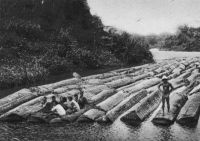 Côte d'Ivoire, flottage de bois d'acajou