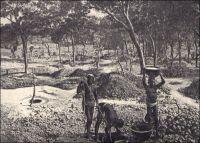 Siguiri : indigènes travaillant aux mines d'or. - On extrait traditionnesdllement de l'or dans la région de la vallée du Haut-Niger, entre Kouroussa et Siguiri, depuis un millénaire ou plus. Les techniques de production fondées sur l'orpaillage, attestées dès le XVIIIème siècle dans l'empire du Mali dont cette région était le cœur, restent inchangées. Des puits individuels traversent la cuirasse pour atteindre les alluvions aurifères sont creusés et exploités en saison sèche. Le minerai, remonté dans des sceaux, est lavé à la batée par les femmes dans des calebasses. Les zones d'exploitation sont attribuées par les « maîtres de l'or », équivalents des « chefs de terre » dans l'agriculture. Commercialisée par les Dioulas, la majeure partie de la production alimente le marché intérieur, et notamment la bijouterie indigène, tandis qu'une fraction achetée par les sociétés de traite est exportée à partir du XXème siècle, entre 50 et 300 kilogrammes par an entre les années 1920 et 1930. Source : (photo) Decourt, Dr Ferdinand, La famille Kerdalec au Soudan, Paris, Ed. Librairie Vuibert, 1910.