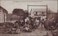 Arrivée d'une caravane d'arachides chez un traitant. - La colonisation s'accompagne d'une ouverture de l'agriculture africaine vers le marché extérieur. Pour les paysans indigènes, les traitants - qu'ils soient Européens ou Africains - sont les intermédiaires incontournables de ce nouveau commerce. En effet, ils achètent aux producteurs la partie non vivrière de leurs récoltes (l'arachide ou le karité au Sénégal, le cacao ou le café en Côte d'Ivoire…), pourvoient à leurs besoins par des prêts en période de soudure et leur vendent tous biens manufacturés tels que vêtements et ustensiles. Au Sénégal, ils viennent souvent de Saint-Louis et constituent l'échelon local de comptoirs tenus dans les plus gros bourgs par des colons ou par des commerçants libanais.