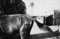 Bamako, une rue (légende manuscrite) – Photo prise par un amateur et datée du 28.10.1942