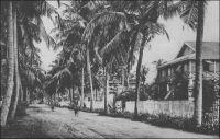 Cotonou, avenue des Cocotiers, Bibliothèque et P.T.T. - – « Très bien, Cotonou. De larges avenues plantées de cocotiers et pavées de coquilles d'huîtres. Voirie rudimentaire, assurée par des poulets étiques et de petits cochons noirs. Les dames de l'endroit n'ont pas froid aux yeux et se poudrent la figure. Les petites filles aussi. Cotonou sent la poudre de riz. » Source : Martet, Jean, Les bâtisseurs de royaumes, Paris, Albin Michel, 1934.